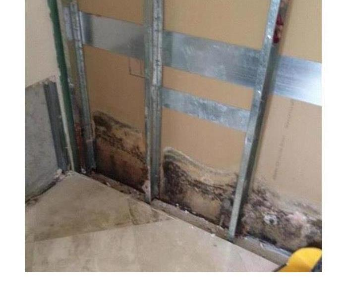Mold Remediation Mold is out there.