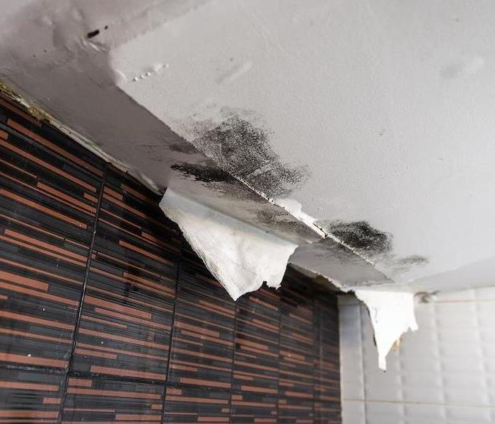 Mold Remediation How to Address Mold Damage Concerns as a Resident of Stockton