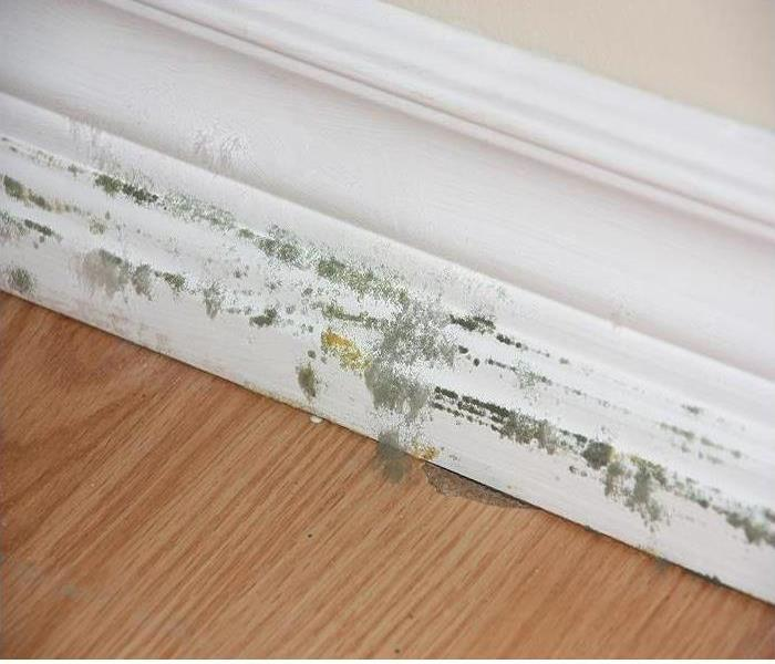 Mold Remediation The Basic of Mold Cleanup
