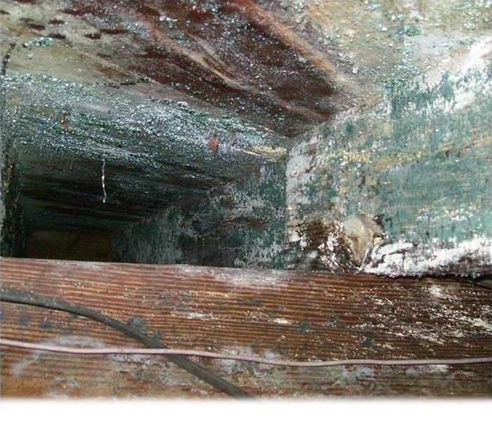 Mold Remediation Is Mold Creeping in the Crawl Space of Your Stockton Home?