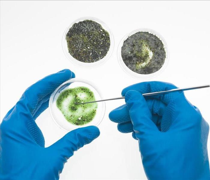 Mold Remediation SERVPRO of Stockton Performs Certified Mold Testing