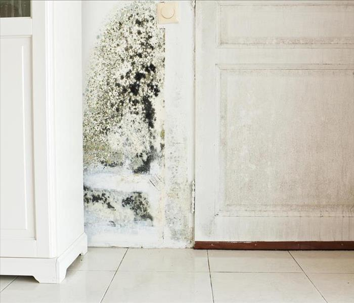 Mold Remediation What To Expect From Professional Mold Remediation In Stockton